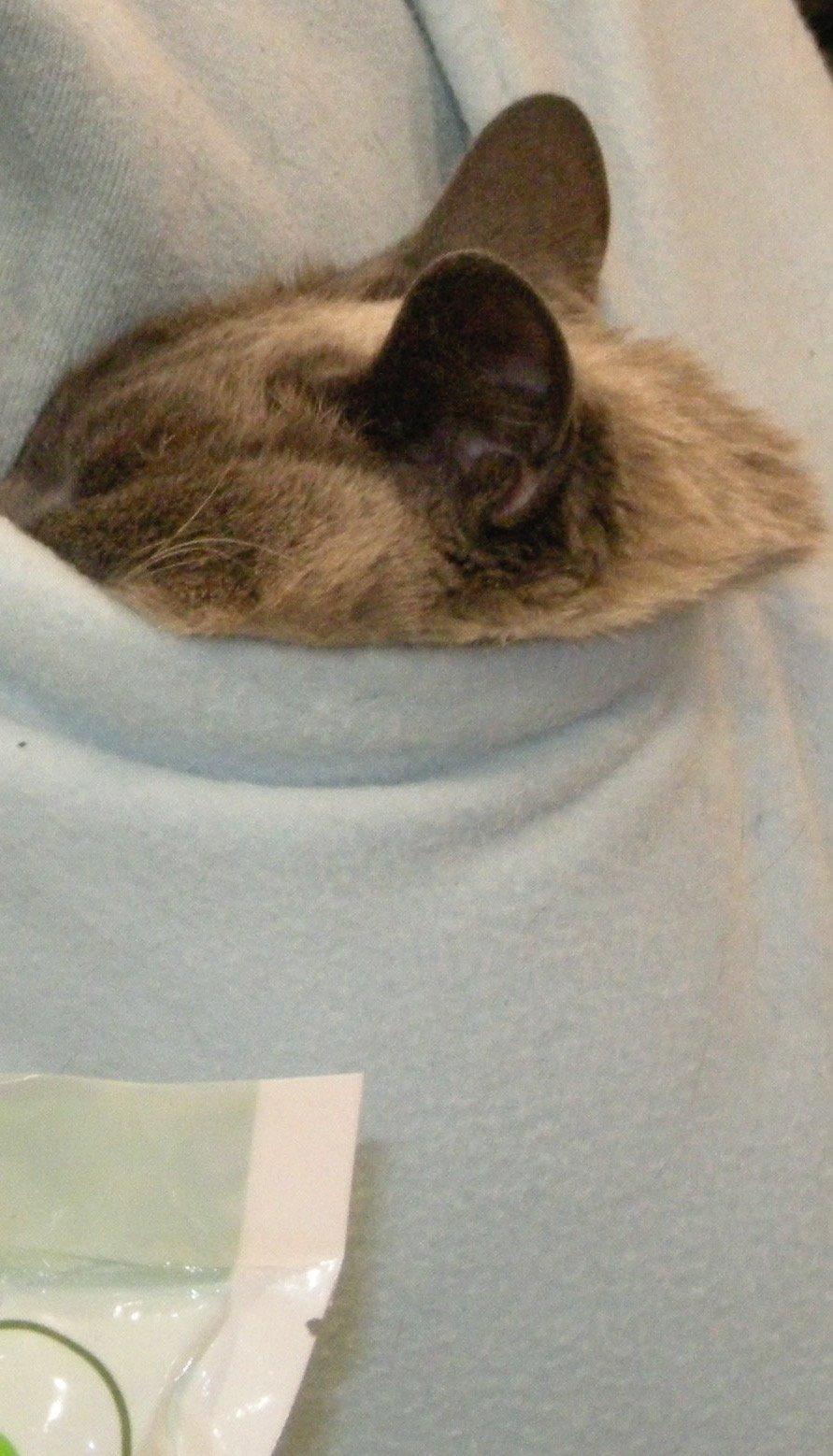Cat and Exhusband – Same Disease!!!